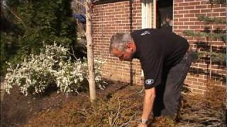 How to Repair Deciduous Trees and Shrubs with Broken Branches