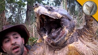 The BIGGEST Turtle You've EVER seen! width=
