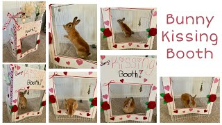 Pet Kissing Booth | Inspired By Jenna Marbles
