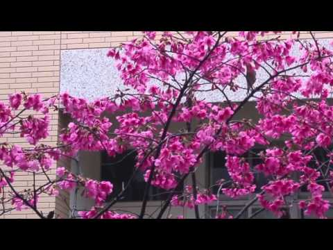 20160307早起鳥兒吃花蜜 - YouTube