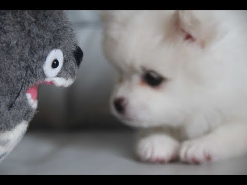 Cute puppy & Totoro