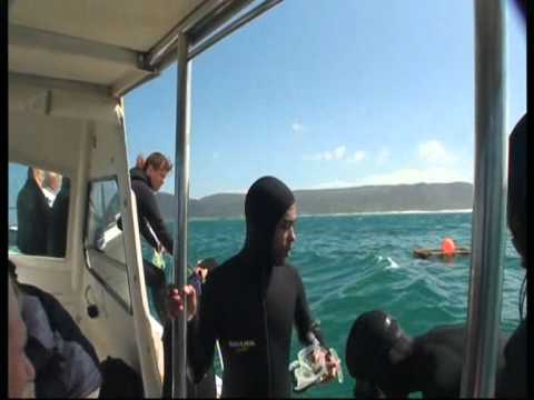 Great White Shark Cage Dive in South Africa 2011