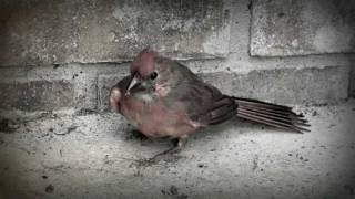 A Day in a Bird's Life - A Reminder of God's Grace - Inspirational Video