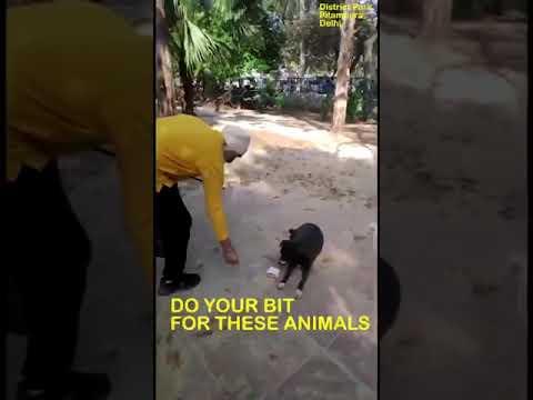 dog feeding in delhi