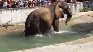 Bojnice ZOO - slon v bazene