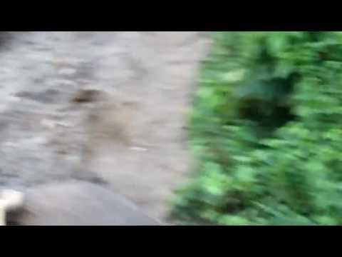 Nepal Chitwan 坐大象