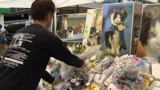Raw: Japan Mourns Tama the Stationmaster Cat