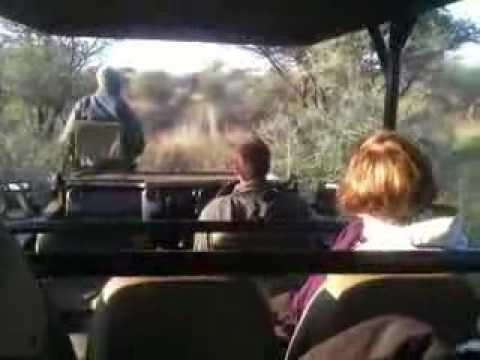 Safari Drive in Madikwe