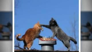 Неугомонные коте