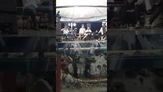 Turneanu și formația Celebrity la Târgoviște