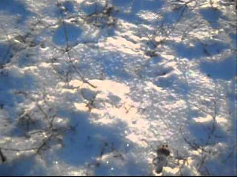06.01.2011 Zaporizhzhya.Ukraine.wmv