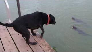 Catfishing doggie style http://facebook.com/everythingdogs