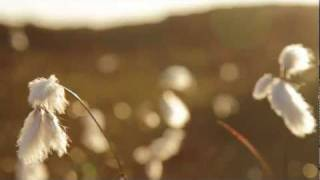 Bon Iver - Skinny Love (Music Video)