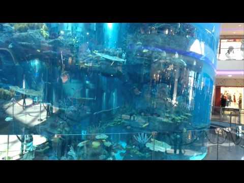 Morocco Mall – Aquarium #2