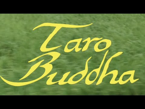 Taro Buddha | Yueqi Qi | GucciFest Emerging Designer Fashion Film