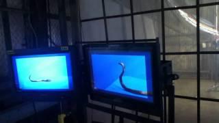 VFX BEHIND THE SCENES: Tiesto vs. Diplo Ft. Busta Rhymes - C'mon