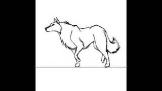 Wolf Walking Animation
