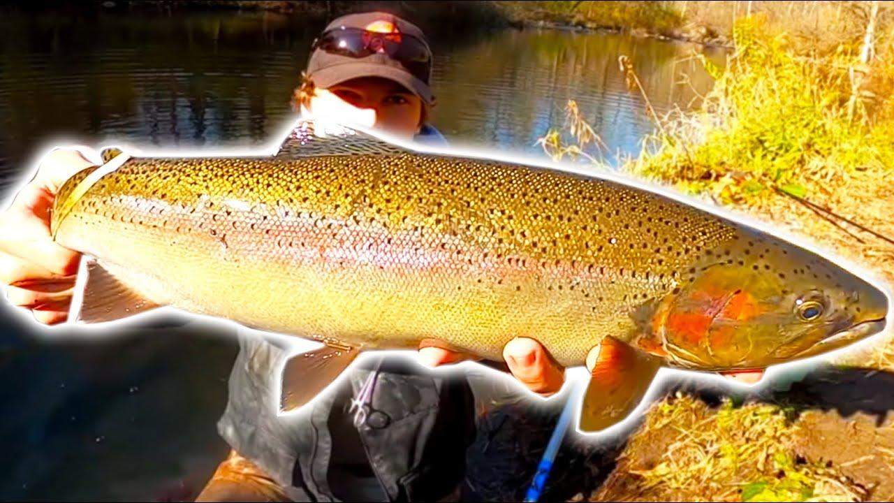 Chiefz - Michigan Fall Steelhead Fishing - November 2020