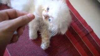 DO NOT BUY A CAT! (não compre um gato) Vídeo do MrPoladoful - Legendado PT-BR