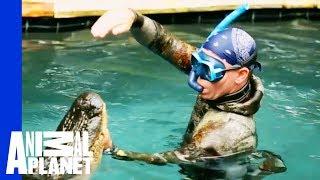 An Unwelcome, 10 Foot Long Pool Guest   Gator Boys width=