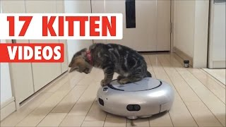 17 Cute Kitten Videos Compilation 2017