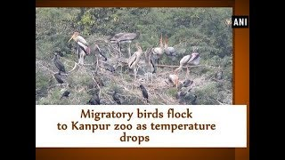 Migratory birds flock to Kanpur zoo as temperature drops - Uttar Pradesh News