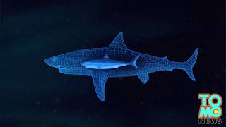 Megalodon found? Giant great white shark eaten by bigger mystery sea monster