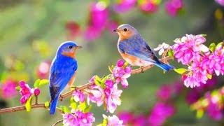"""Antonio Vivaldi - """"Four Seasons op.8, Spring : Allegro""""  - (Violin : Itzhak Perlman) -"""