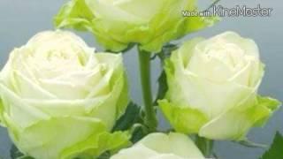 Virágeső-  Babics András