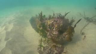 Schiedam Dive 02/11/2016