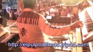 ALFREDO EL PULPO - DOROTEA