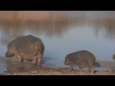 My trip to South Africa – July 2009 – Awesome video in HD