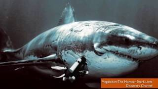 MEGALODON SHARK EXISTS! Recent sightings & sharks pictures prove it.