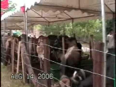 Feria de Juigalpa, Chontales  Nicaragua
