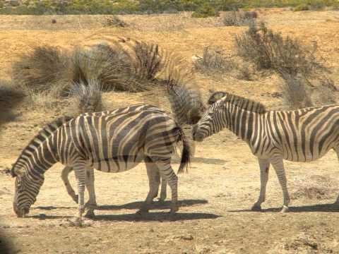 Safari Day – Aquila Game Reserve