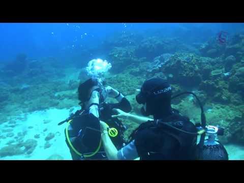 Diving in Sodwana Bay