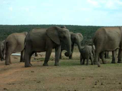Addo Elephant National Park(South Africa)