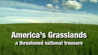 America's Grasslands: A Threatened National Treasure