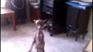 Ran Can Can El Original Salsa Dancing