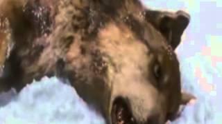Nineball - Akulah Serigala ( Video Cover )