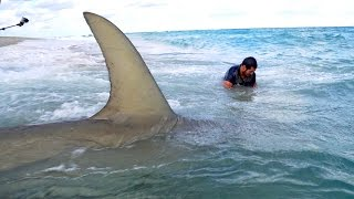 Monster Sharks caught Fishing from the Beach - 4K