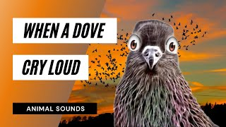 When A Dove Cry - Sound Effect - Animation