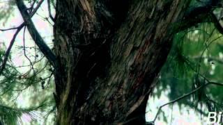 Syberian Beast meets Mr.Moore - Wien (Music Video)