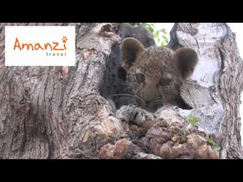 Volunteer in Africa with Amanzi Travel at Noah's Ark Wildlife Sanctuary.wmv