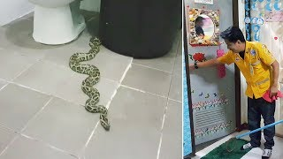 Woman Finds Python In The Toilet