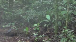 pariri e inhambuguaçu