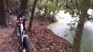 Lagartos y bici montaña en la Florida