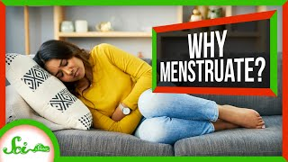 Why Do People Have Periods When Most Mammals Don't?