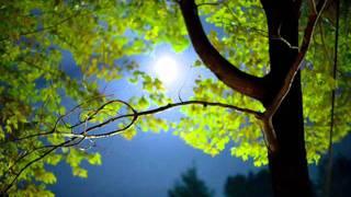 Nu Jazz [Robert Bitte - Autumn Moon] | ♫ RE ♫