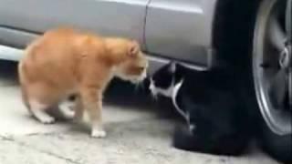 Gatos Discutindo a Relação